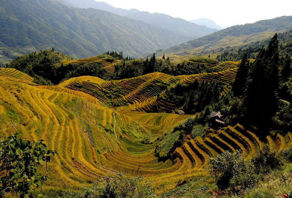 arrozales2